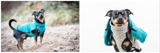 Pinscher Buddy, Buddy and Me, Hundeblog, Dogblog, Zwergpinscher, Leben mit Hund, Hundefotografie, Essen, Ruhrgebiet, Gassi, Outdoor, Produkt, Test, Empfehlung, Tipp, Erfahrungen, Hundekleidung, Hundebekleidung, praktisch, pflegeleicht, Winter, Herbst, kurzhaar, keine Unterwolle, kleine Hunde, Sofadogwear, Hachico, Jumper, Buster, Warmup Cape. Action Factory
