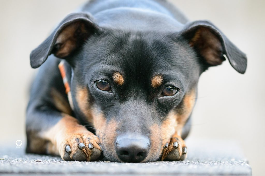 Buddy and Me, Hundeblog, Dogblog, Hundebegegnungen, Angriff, Attacke, Tierarzt, Erfahrungen, Erlebnisse