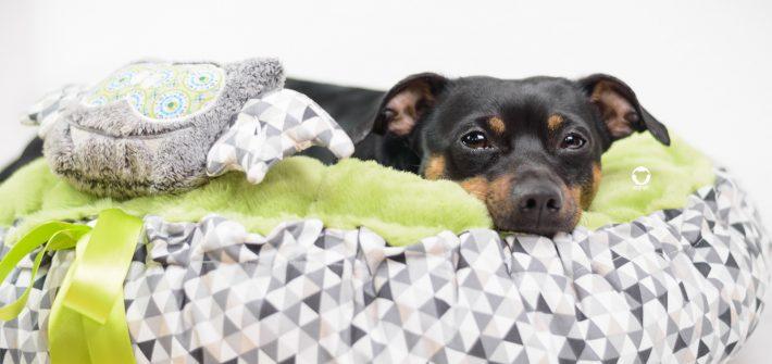 Pinscher Buddy, Hundeblog, Dogblog, Kooperation, Produkttest, Lila Chic Mini Dogs, kleine Hunde, Kleinhund, Hundezubehör, hangemacht, Körbchen, Buh, Wellnessfleece, gemütlich, Nikon D3200