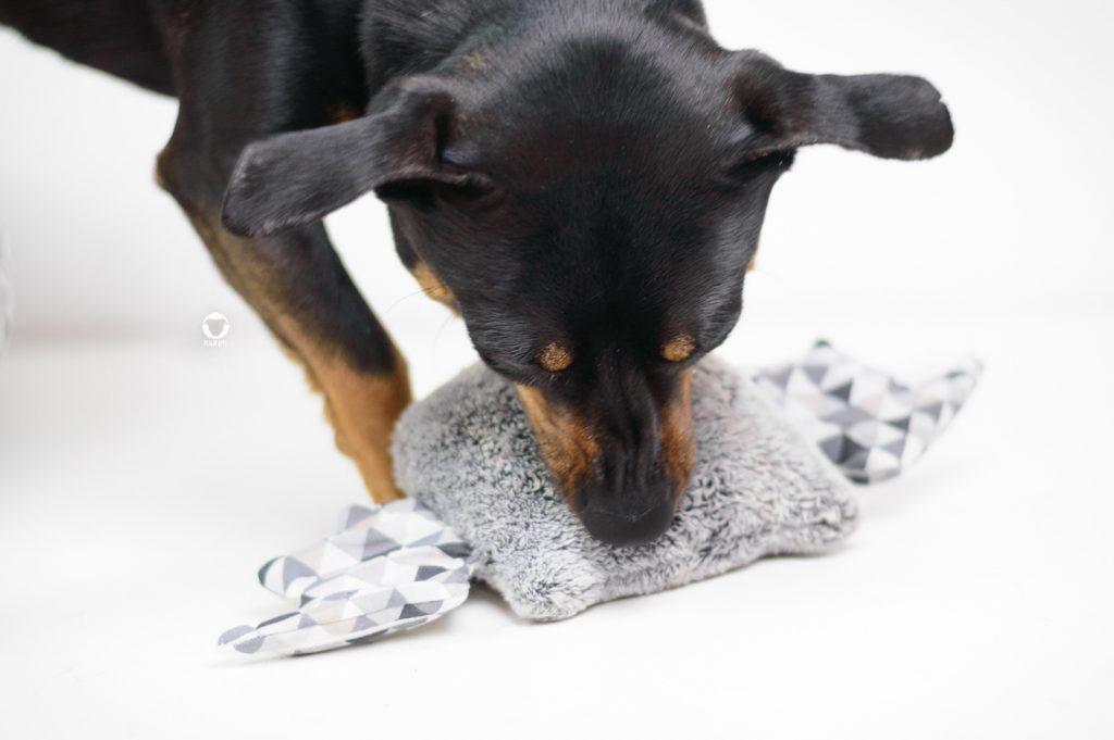 Pinscher Buddy, Hundeblog, Dogblog, Kooperation, Produkttest, Lila Chic Mini Dogs, kleine Hunde, Kleinhund, Hundezubehör, hangemacht, Buh, Hundespielzeug, Nikon D3200