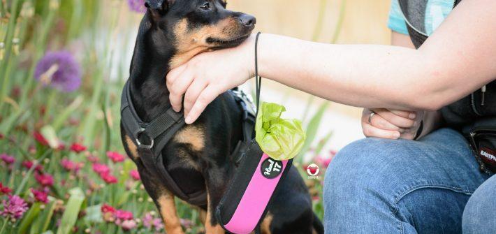 Pinscher Buddy, Hundeblog, Produkttest, Kooperation, Hund 17, Häufchenhelfer, Hundealltag, Hilfsmittel