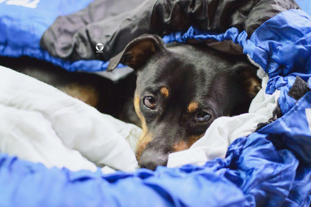 Pinscher Buddy, Hundeblog, Buddy and Me, Dogblog, Camping mit Hund, Shoppen, Einkaufen, Packliste, Urlaub mit Hund, Niederlande, Holland