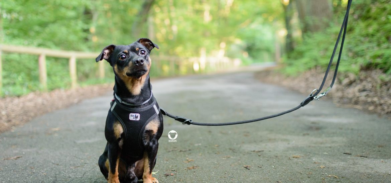 Pinscher Buddy, Buddy and Me, Hundeblog, Dogblog, Essen, Ruhrgebiet, Gassi, Tipps, Kupferdreh, Deilbachtal, Bach, Wasser, Spaziergang