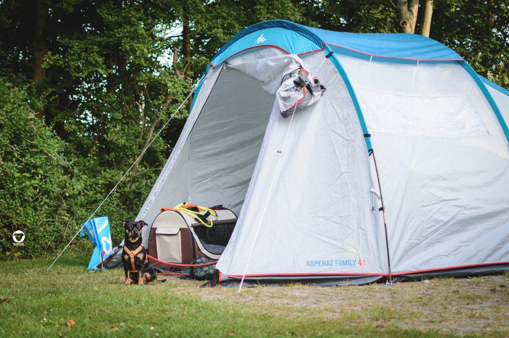 Pinscher Buddy, Buddy and Me, Hundeblog, Dogblog, Urlaub mit Hund, Hundeurlaub, Camping mit Hund, Zelten, Decathlon