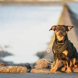 Pinscher Buddy, Buddy and Me, Hundeblog, Dogblog, Urlaub mit Hund, Hundeurlaub, Camping mit Hund, Nordsee, deutsche Küste, Norddeich, Norden, Ostfriesland, Nordsee-Camp Norddeich, Hundestrand, Hundefotografie, Nikon D3200