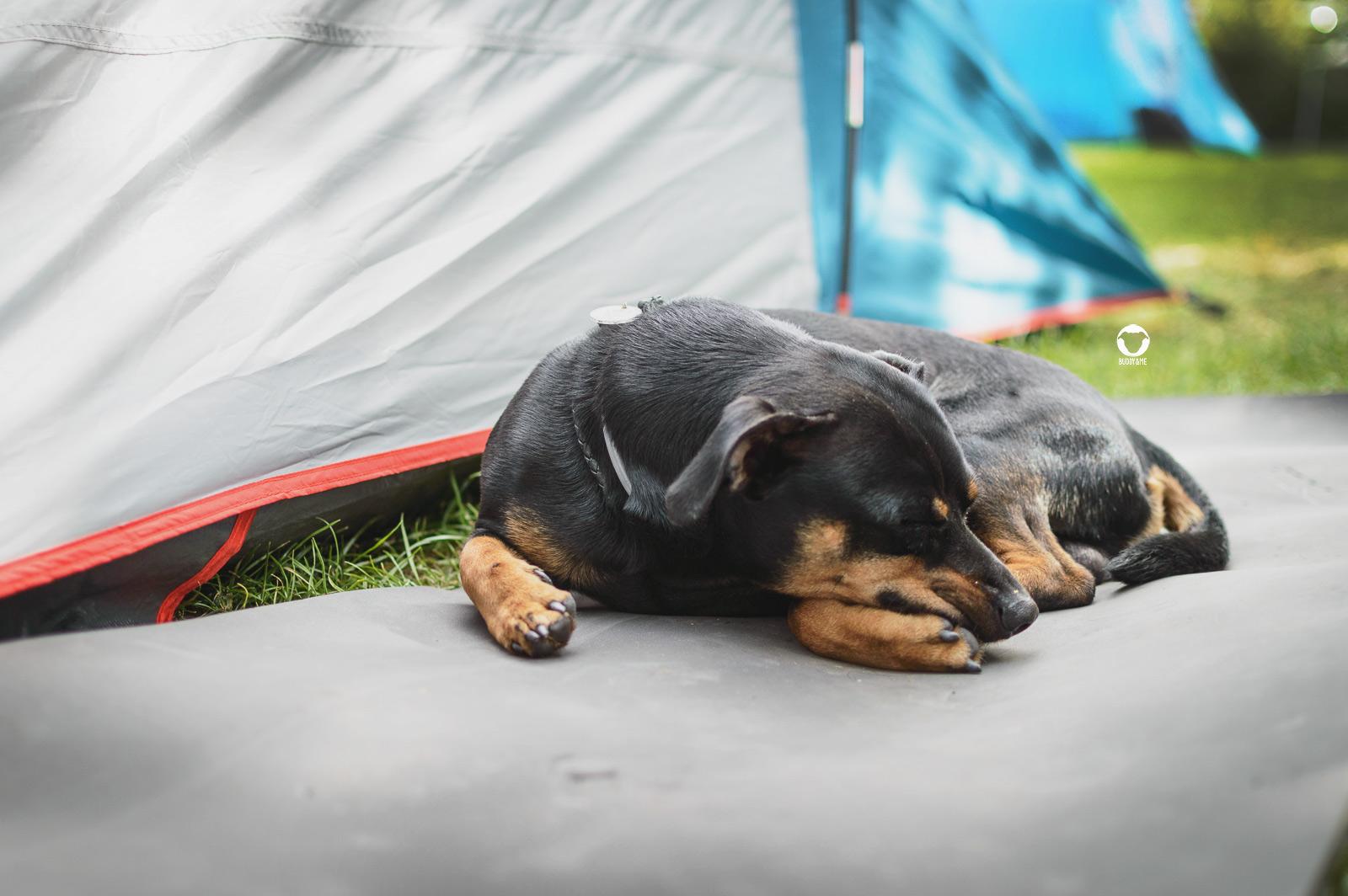 Pinscher Buddy, Buddy and Me, Hundeblog, Dogblog, Urlaub mit Hund, Hundeurlaub, Camping mit Hund, Nordsee, deutsche Küste, Norddeich, Norden, Ostfriesland, Nordsee-Camp Norddeich, Hundefotografie, Nikon D3200
