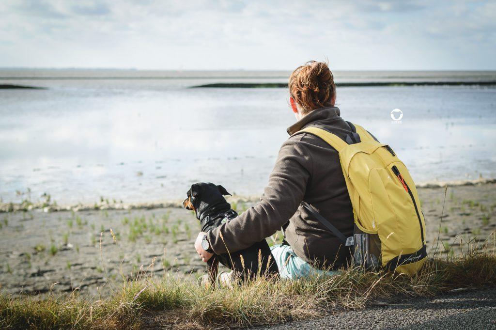 Pinscher Buddy, Buddy and Me, Hundeblog, Dogblog, Urlaub mit Hund, Hundeurlaub, Camping mit Hund, Nordsee, deutsche Küste, Norddeich, Norden, Ostfriesland, Nordsee-Camp Norddeich, Hundefotografie, Nikon D3200, Watt, Wattenmeer, Hundeliebe