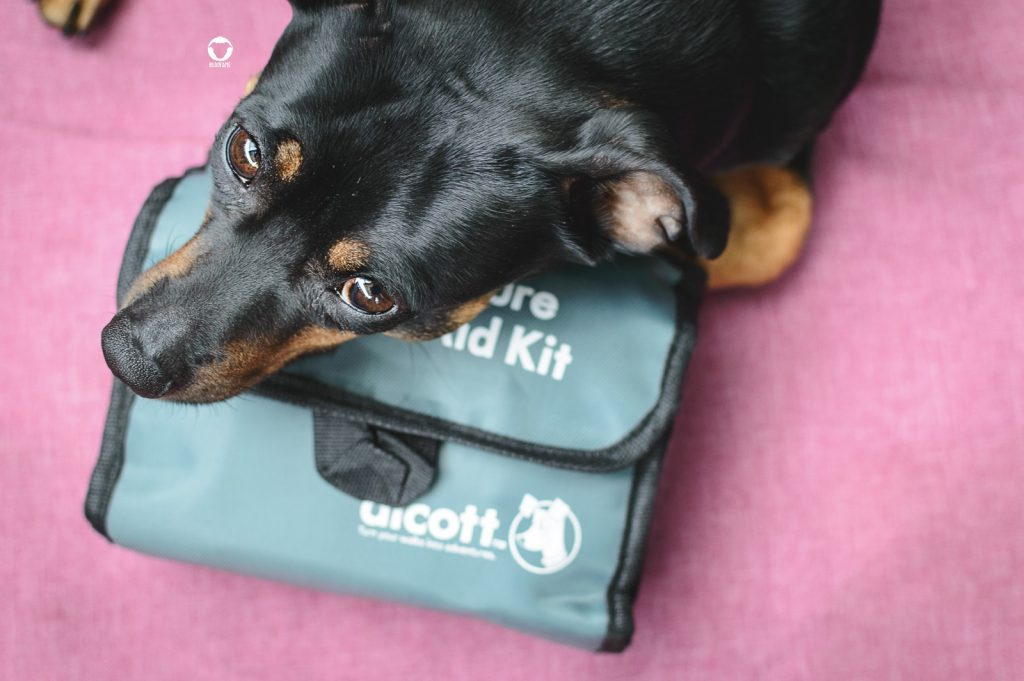 Pinscher Buddy, Buddy and Me, Hundeblog, Dogblog, Camping mit Hund, Ausrüstung, Equipment
