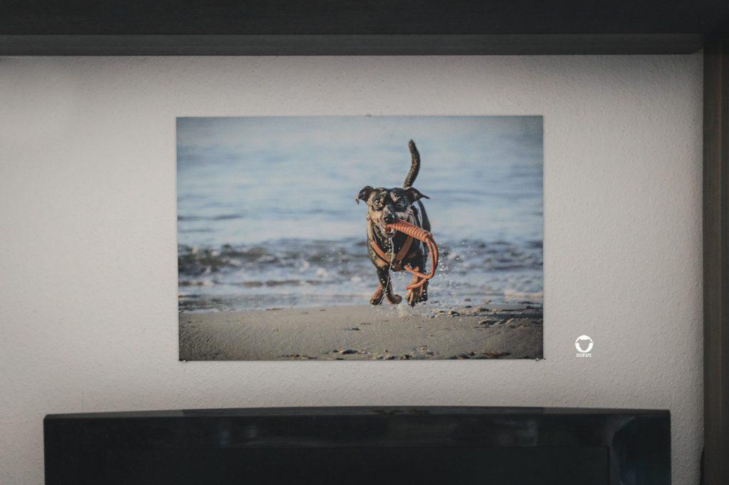 Pinscher Buddy, Buddy and Me, Hundeblog, Dogblog, Werbung, Kooperation, Fotoprint, Alu Dibond, ZOR, preiswert, günstig, Hundefotografie, Fotografie, Nikon D3200