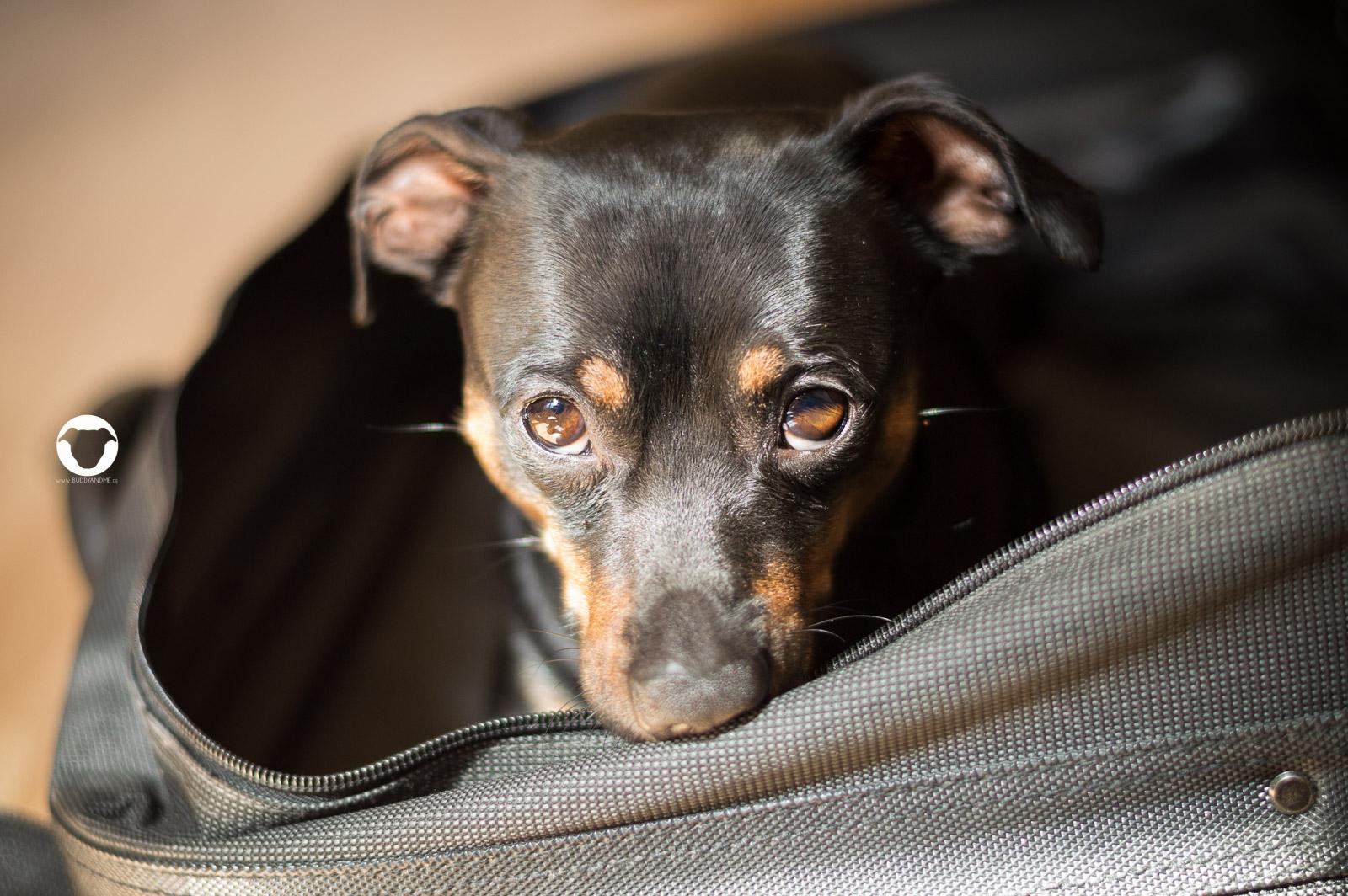 Pinscher Buddy, Hundeblog, Dogblog, Buddy and Me, Camping mit Hund, Koffer, Ausrüstung