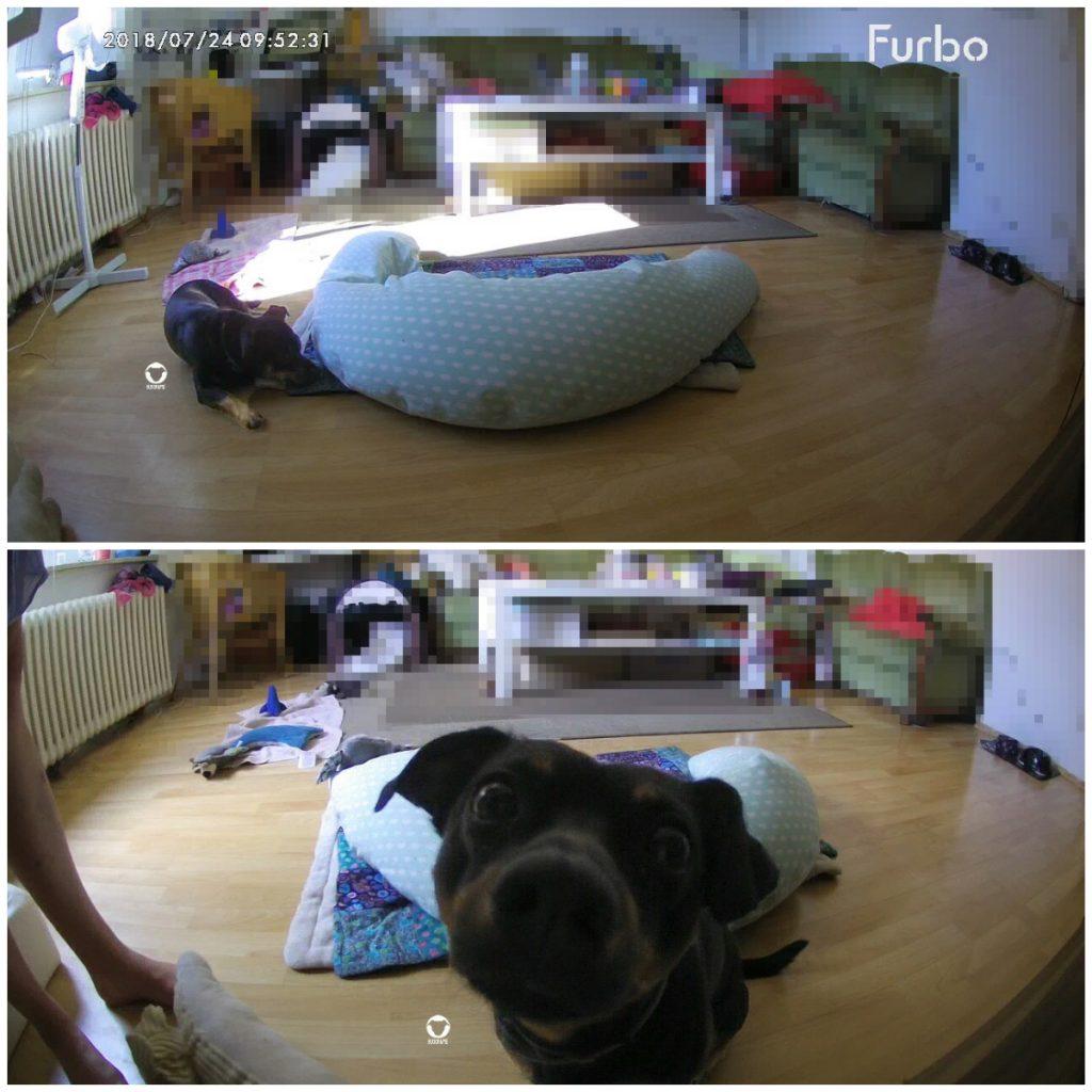 Pinscher Buddy. Buddy and Me, Hundeblog, Dogblog, Furbo Hundekamera, Alleinbleiben, Hund alleine Zuhause, Haustierkamera, Überwachung, beobachten, Training