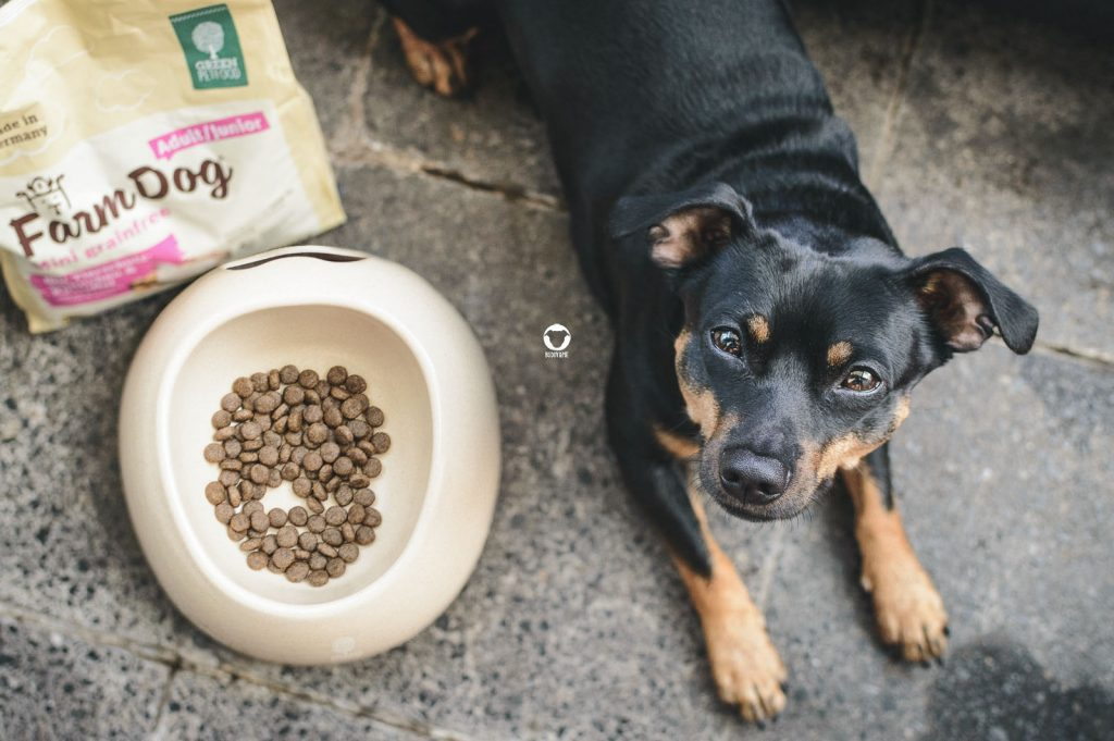 Pinscher Buddy, Buddy and Me, Hundeblog, Dogblog, Camping mit Hund, Ausrüstung, Equipment, Futter, Trockenfutter, Green Petfood, FarmDog Mini