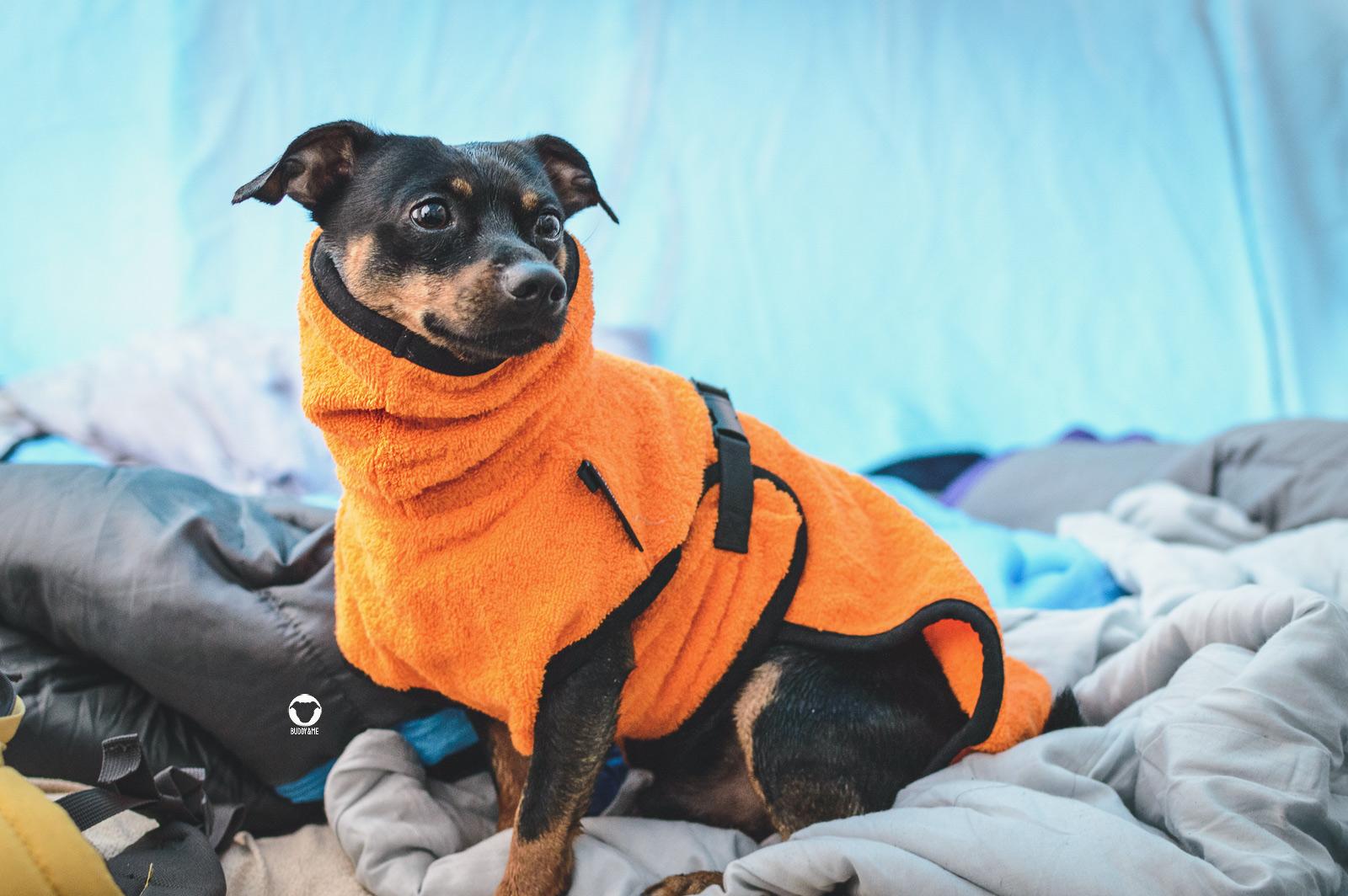 Pinscher Buddy, Buddy and Me, Hundeblog, Dogblog, Hundeurlaub, Urlaub mit Hund, Camping, Deutschland, Ostsee, deutsche Küste Fehmarn, Katharinenhof, August, Meer, Strand, Hundestrand, Naturstrand