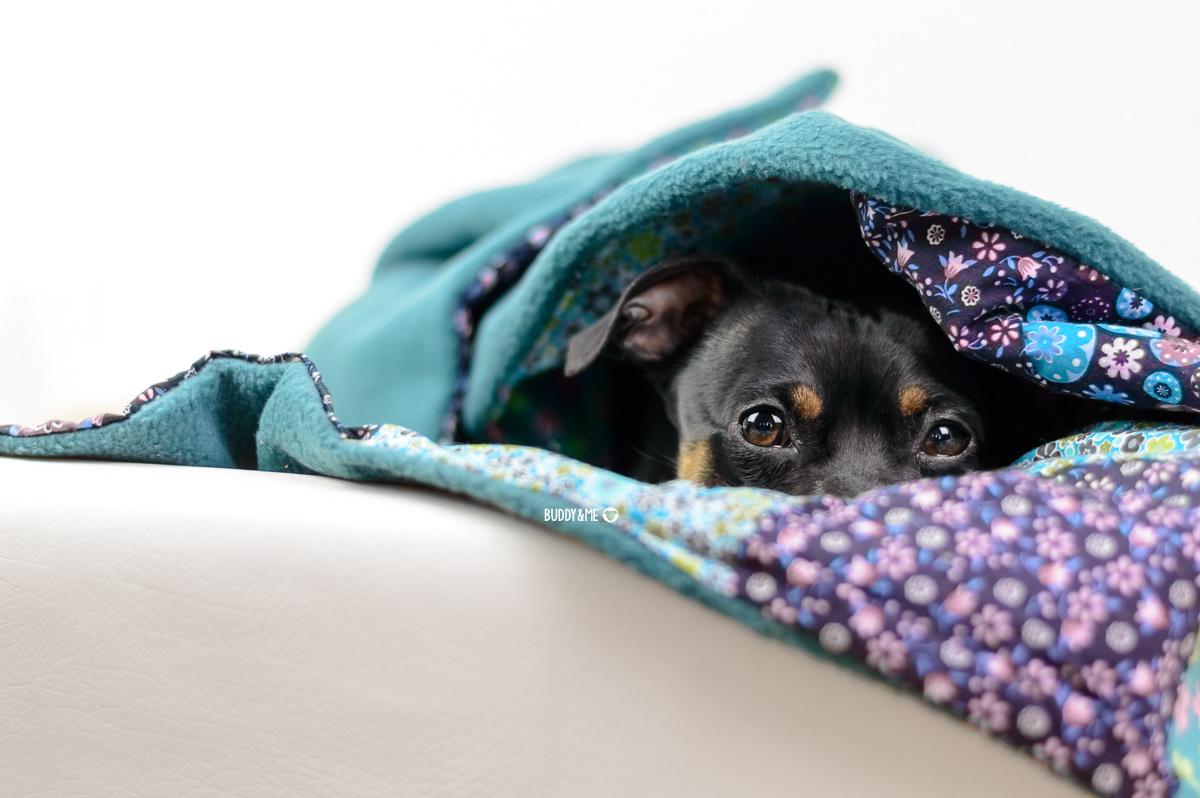 Pinscher Buddy, Buddy and Me, Hundeblog, Dogblog, Stimmungen, Montag, Montagsblues, Empathie, übertragen, Umgebung, anstecken, Gefühle, Emotionen