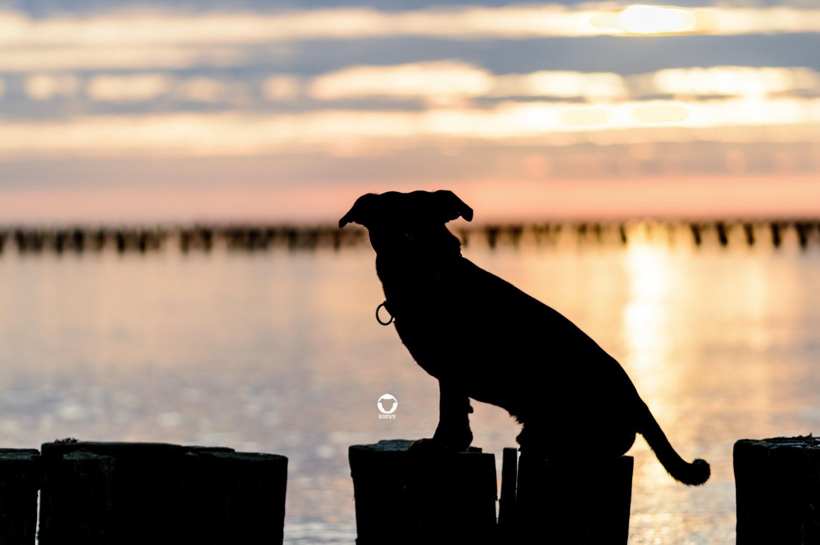 Pinscher Buddy, Buddy and Me, Hundeblog, Dogblog, Hundeurlaub, Darß, Zingst, Ostsee, Urlaub, September, Spätsommer, Strand, Meer, Natur, Erholung, Ruhe, Achtern Diek, Reetdachhaus, Ferienwohnung mit Hund, Hundefotografie