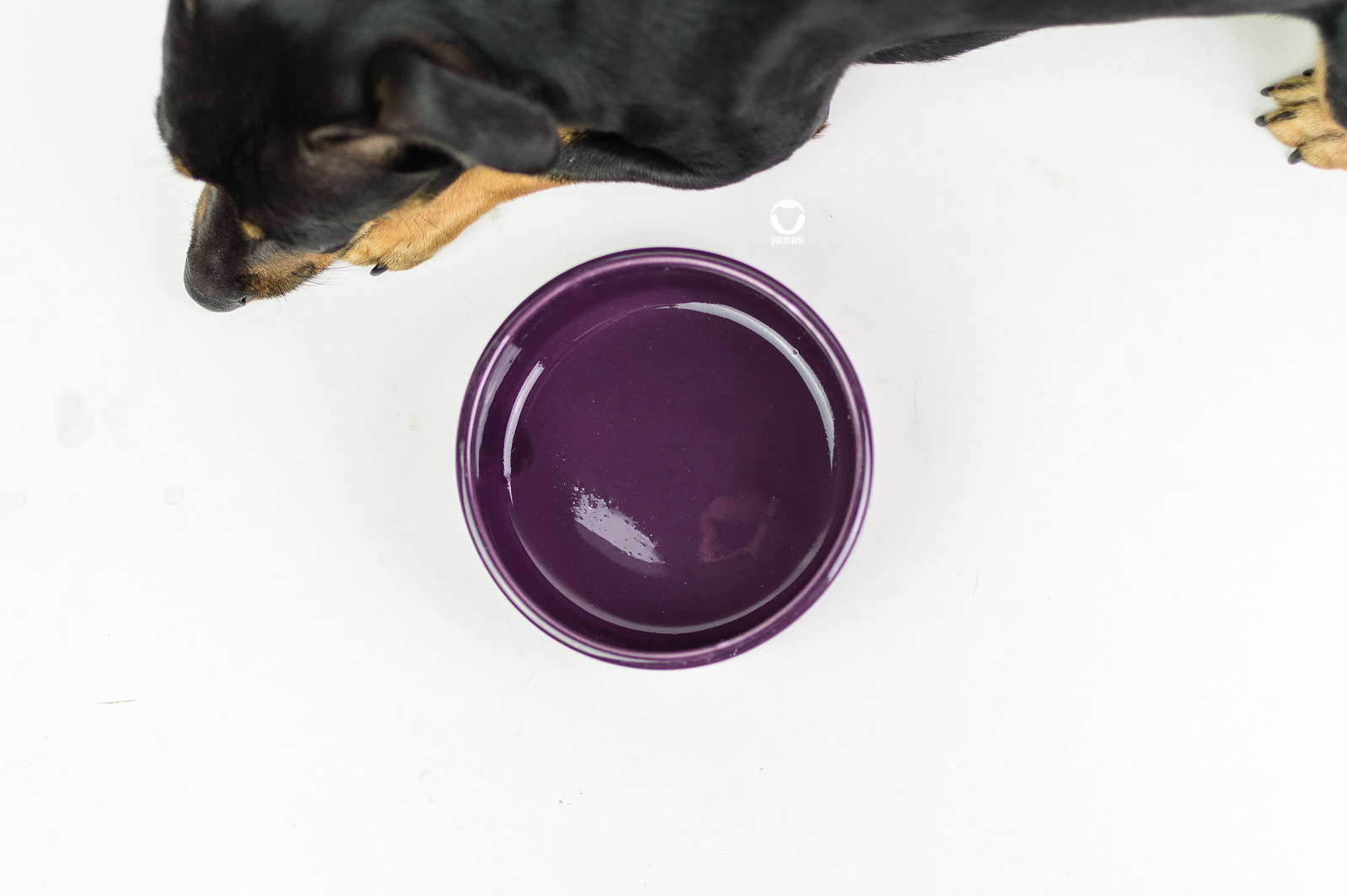 Pinscher Buddy, Buddy and Me, Hundeblog, Dogblog, Ruhrgebiet, Futter, Barf, Barfen, Rohfütterung, Obst-Gemüse, Ballaststoffe, Flohsamenschalen, weicher Kot, Output, Häufchen, Barfplan, Futterplan, Ernährungsberatung