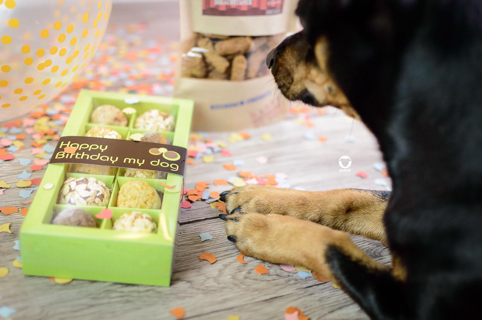 Pinscher Buddy, Buddy and Me, Dogblog, Hundeblog, Geburtstag, Hundegeburtstag, fünf Jahre, Pinscher, Zwergpinscher, Ruhrgebiet, feiern, Happy Birthday, Hamburger Kugeln
