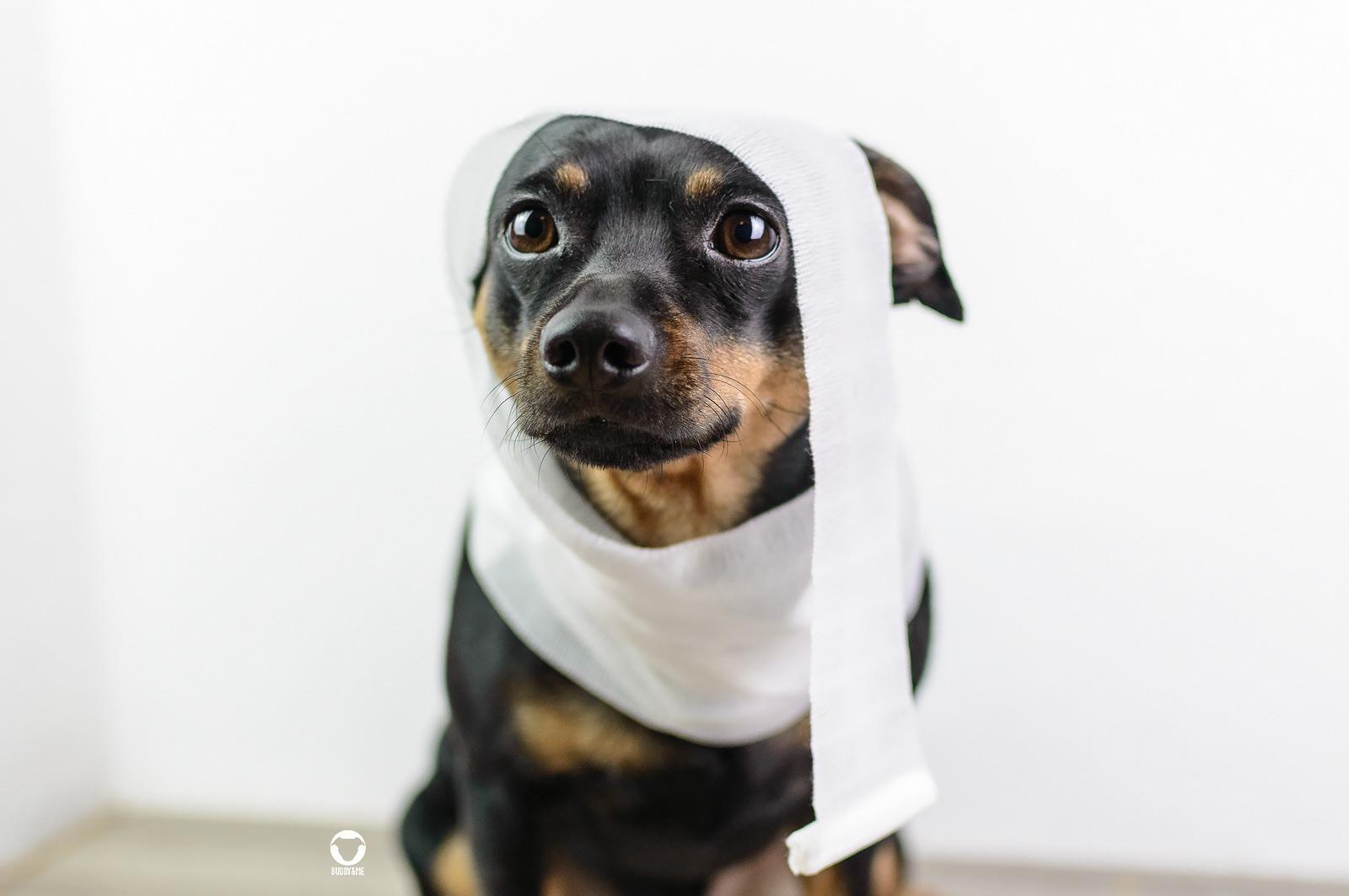 Pinscher Buddy, Buddy and Me, Hundeblog, Dogblog, Kooperation, Agila, Tierkrankenversicherung, Tierarztkosten, Kosten Hund, vorhersehen, kalkulieren, bereichnen, Tierarztbesuch, Ausgaben, Rechnung, Gesundheit, Vorsorge, Behandlungen, Impfung, Verletzung