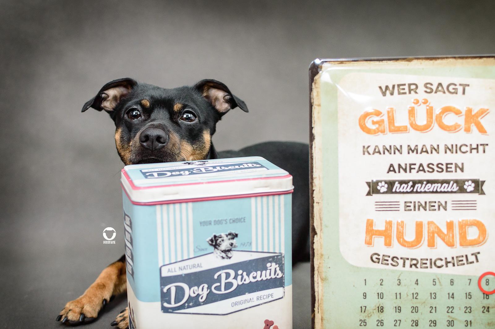 Pinscher Buddy, Buddy and Me, Hundeblog, Dogblog, Kooperation, Produkttest, Erfahrungen, Pfotenschild, Nostalgic Art, Deko, Hundehaushalt, Hundeliebhaber, Retrodesign, Shabby Chic, Blechschilder, Blechdosen, Leckerlidosen, Hundekeksdosen, Kalender, Schlüsselanhänger, nostalgisch, Hundetasse, Hundeliebe, Geschenkidee, Dekoration, Zuhause