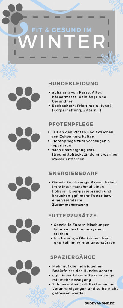 Pinscher Buddy, Buddy and Me, Hundeblog, Dogblog, Winter, Schnee, Hundekleidung, Hund im Winter, fit, gesund, Pflege