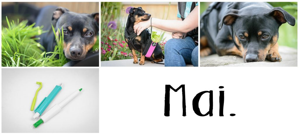 Pinscher Buddy, Buddy and Me, Hundeblog Dogblog, Jahresrückblick, A little bit of Lately, 2018, Blogger
