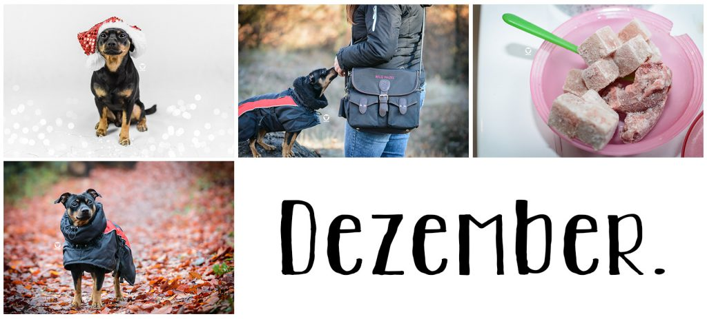 Pinscher Buddy, Buddy and Me, Hundeblog Dogblog, Jahresrückblick, A little bit of Lately, 2018, Blogger
