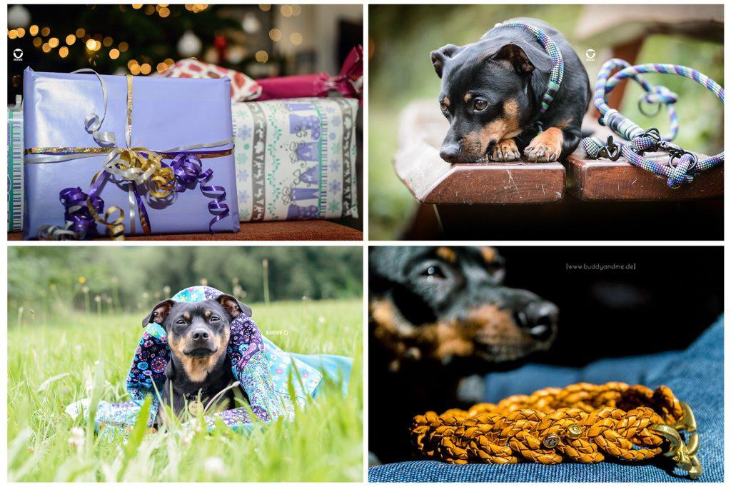 Pinscher Buddy, Buddy and Me, Hundeblog, Dogblog, Weihnachten, Geschenke, weihnachtsgeschenke für Hunde, Geschenkideen, Geschenktipps für Hunde, für Zweibeiner, Last Minute, Gassi Glamour, Glückshund, Made by Louis, Gutscheine