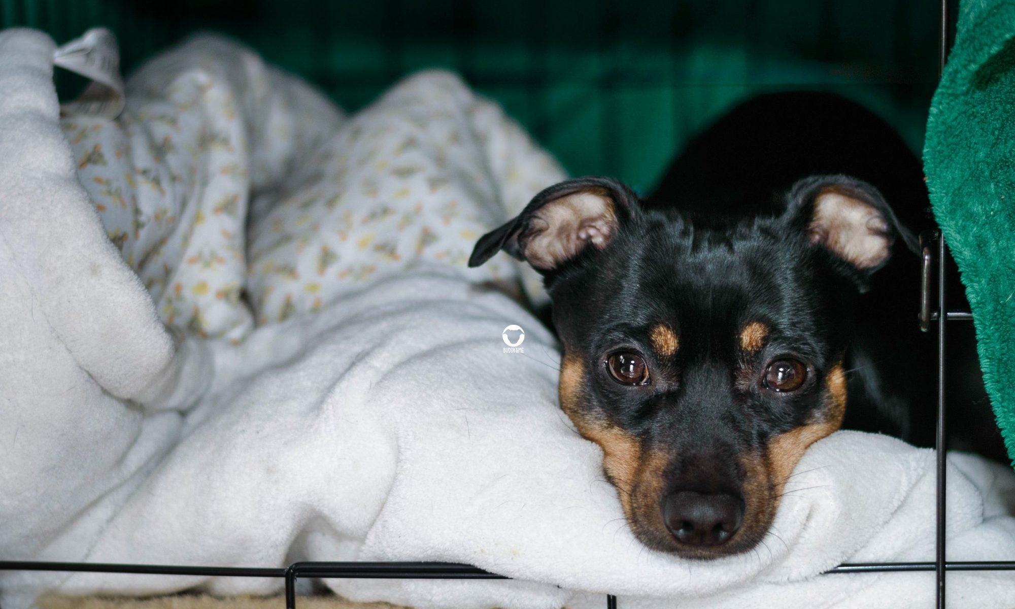 Pinscher Buddy, Buddy and Me, Hundeblog, Dogblog, Leben mit Hund, Ruhrgebiet, Silvester, Angst, Knallerei, Feuerwerk, Gewitter, Hundebox, Rückzugsort