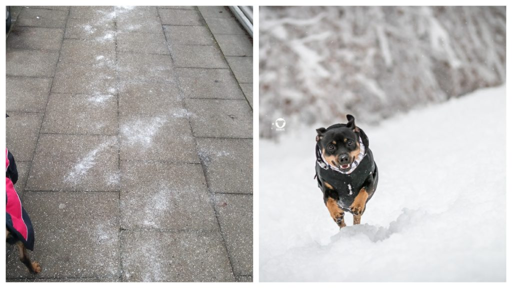 Pinscher Buddy, Buddy and Me, Hundeblog, Dogblog, Ruhrgebiet, Essen, Winter, Schnee, Streusalz, Gefahr, schädlich, Problem, Verbot
