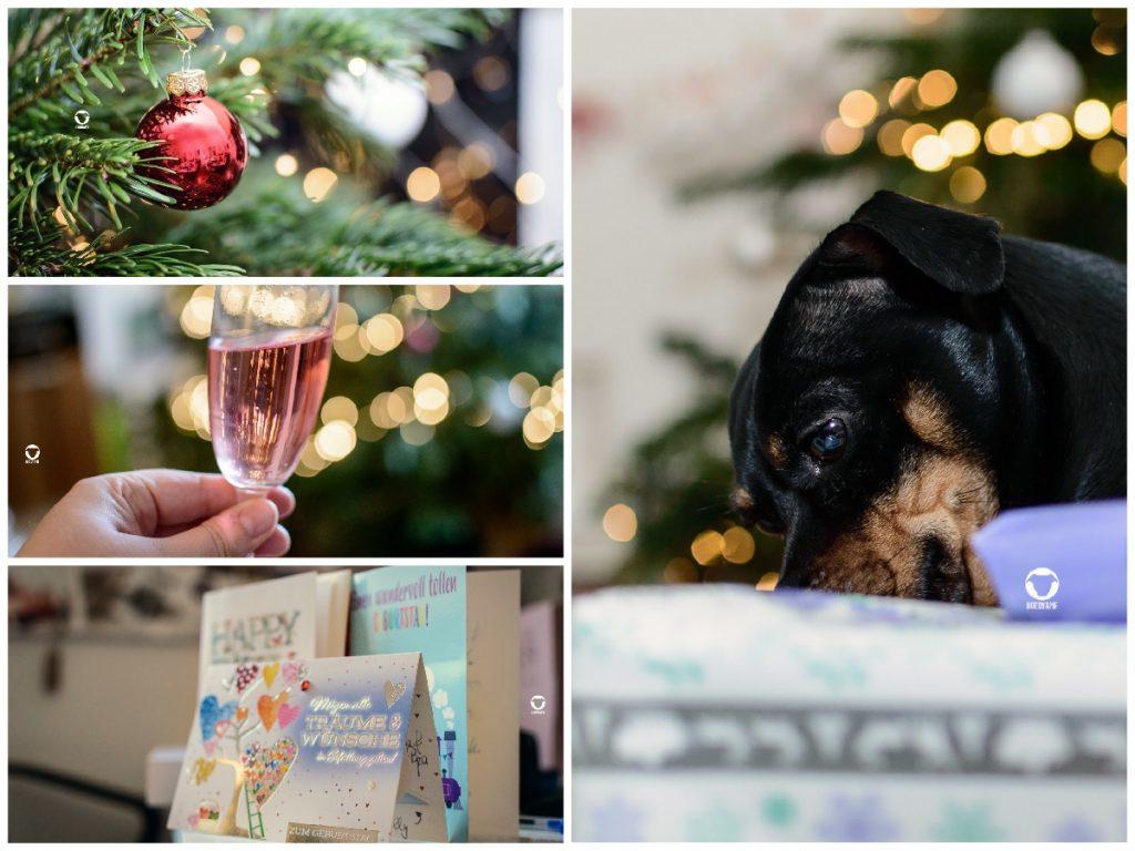 Pinscher Buddy, Buddy and Me, Hundeblog, Dogblog, Weihnachten, Geschenke, Rückblick, A little bit of Lately