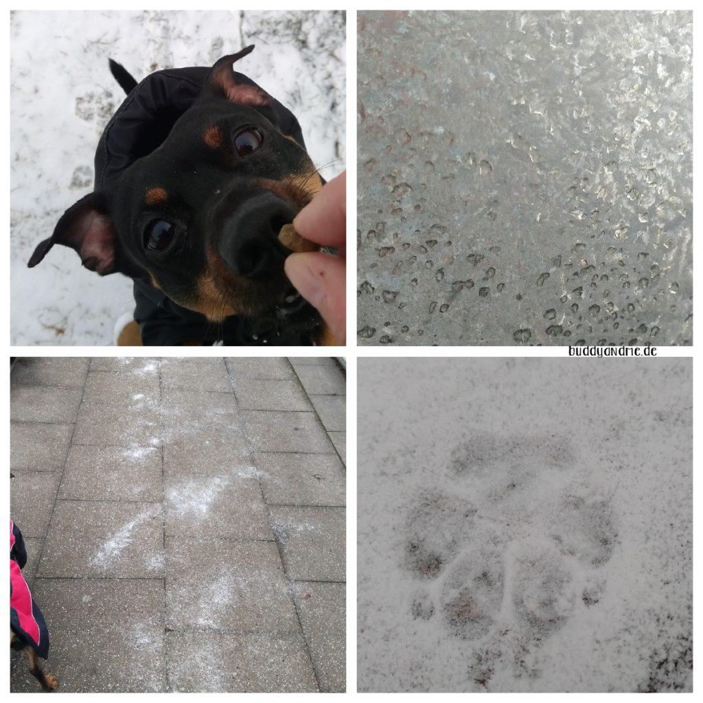 Pinscher Buddy, Buddy and Me, Hundeblog, Dogblog, A little bit of Lately, Januar, 2019