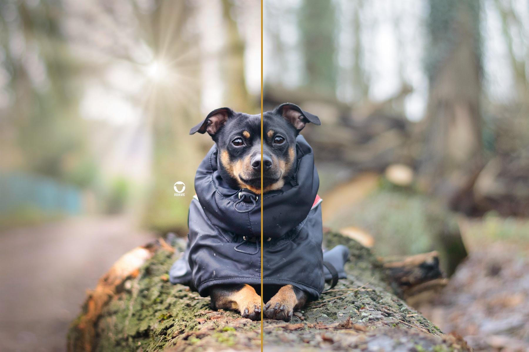 Pinscher Buddy, Buddy and Me, Hundeblog, Dogblog, Bildbearbeitung, Fotografie, Hundefotografie, Nikon, Luminar 3