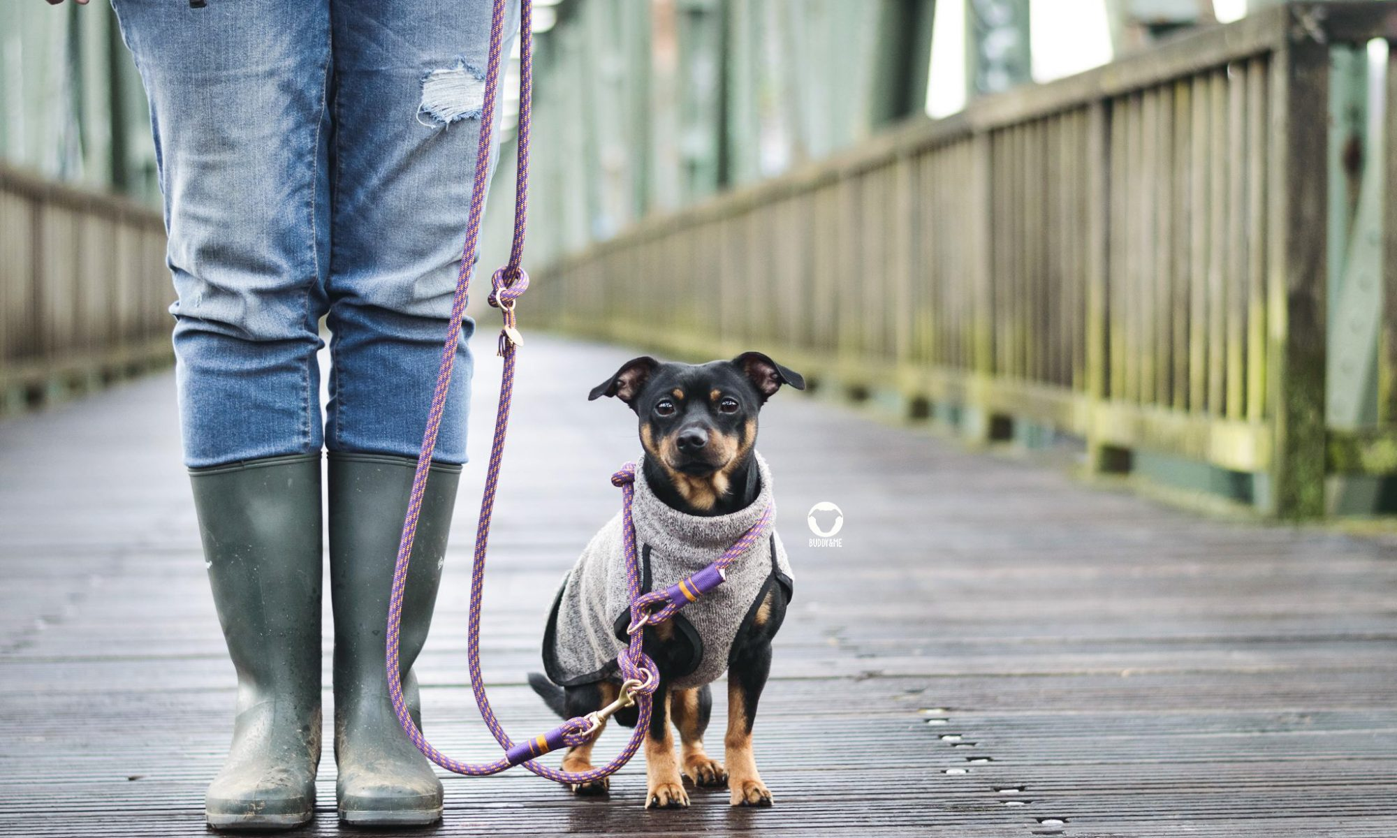Pinscher Buddy, Buddy and Me, Hundeblog, Dogblog, Produkt, Empfehlung, Tauwerk, Tauleine, Retrieverleine, Kuckuckshund, handgemacht, Frühling, lila, gelb