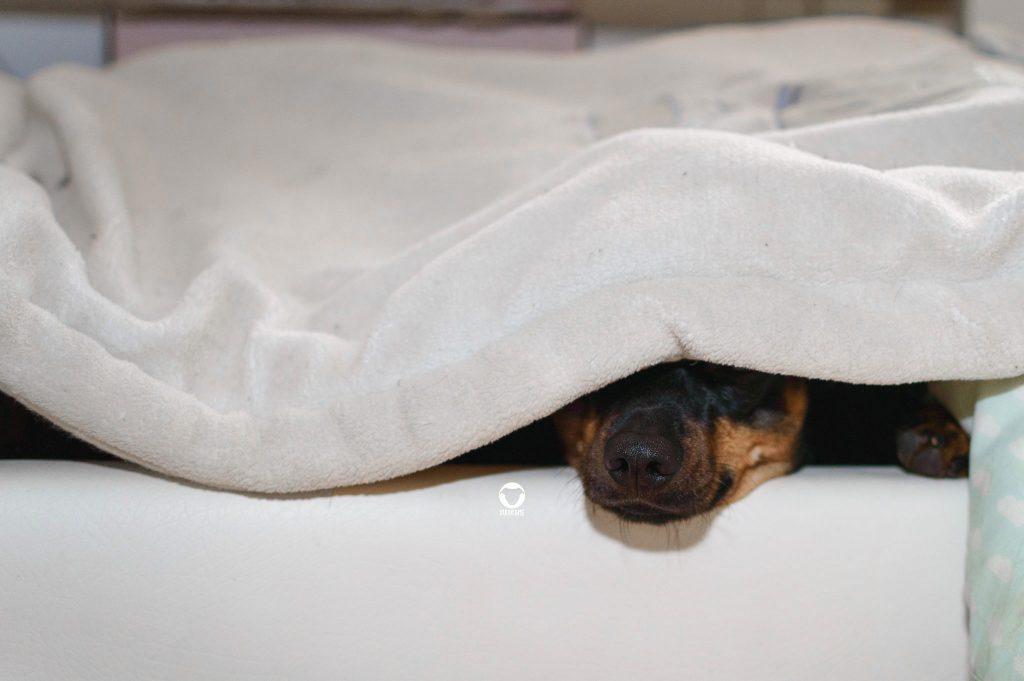 Pinscher Buddy, Buddy and Me, Hundeblog, Dogblog, Petfluencer, Ruhrgebiet, Korb, Körbchen, Schlafplatz, Hundebett, Hundedecke, Schlafen, Ruhen