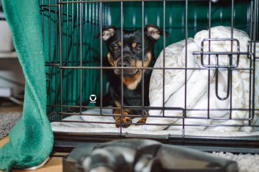 Pinscher Buddy, Buddy and Me, Hundeblog, Dogblog, Staubsauger, Haushalt, Angst, Ungeheuer, verstecken, flüchten, Hundealltag, Hundebox, Sicherheit