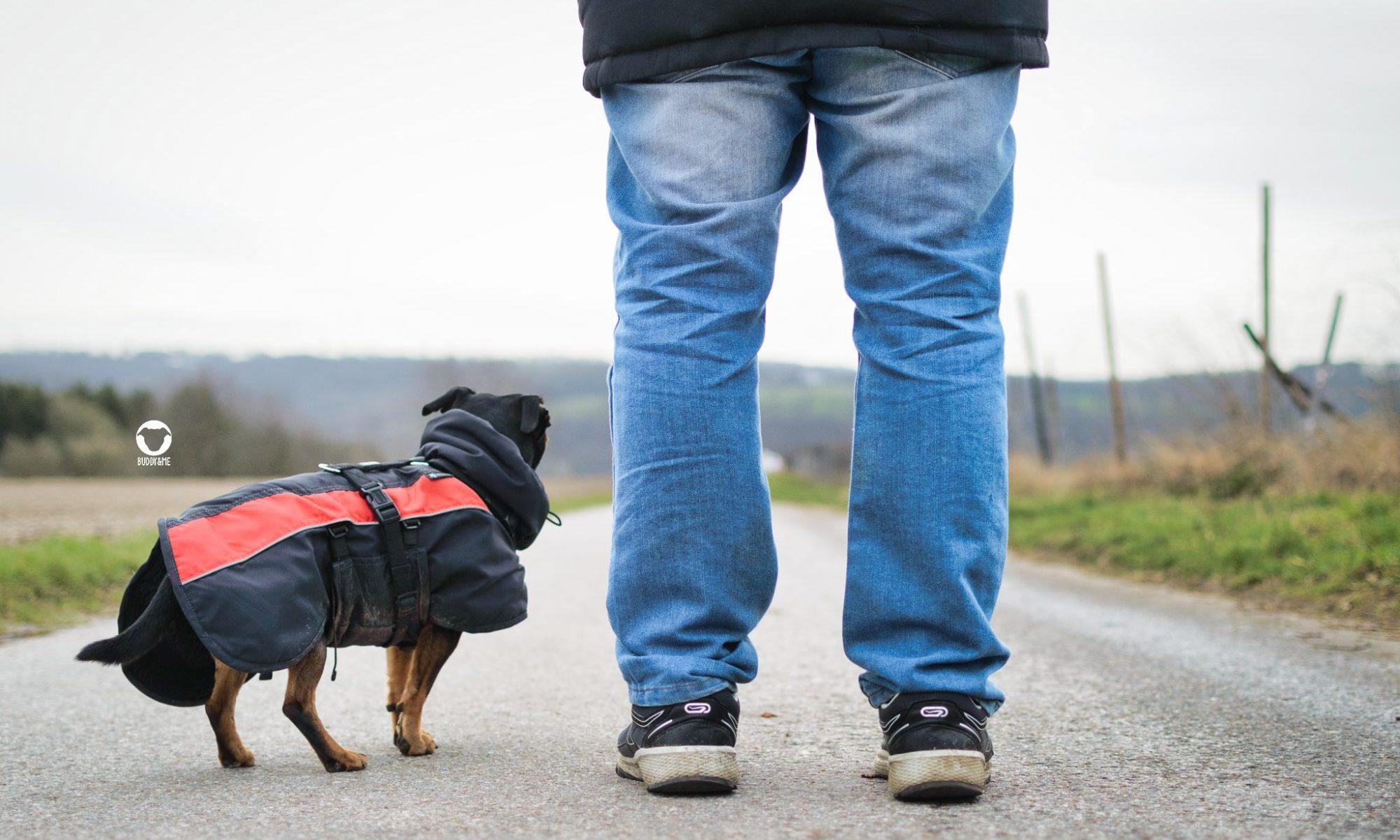Pinscher Buddy, Buddy and Me, Hundeblog, Dogblog, Alltag, Spaziergang, März, Winter, Sturm, Kälte, Gassi, unterwegs