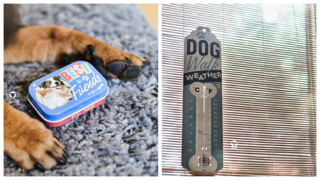 Pinscher Buddy, Buddy and Me, Hundeblog, Dogblog, Nostalgic Art, PfotenSchild Kollektion, Produkte, Hundeliebhaber, Hund, Tipp, Geschenkidee, Blechschilder, Nostalgie