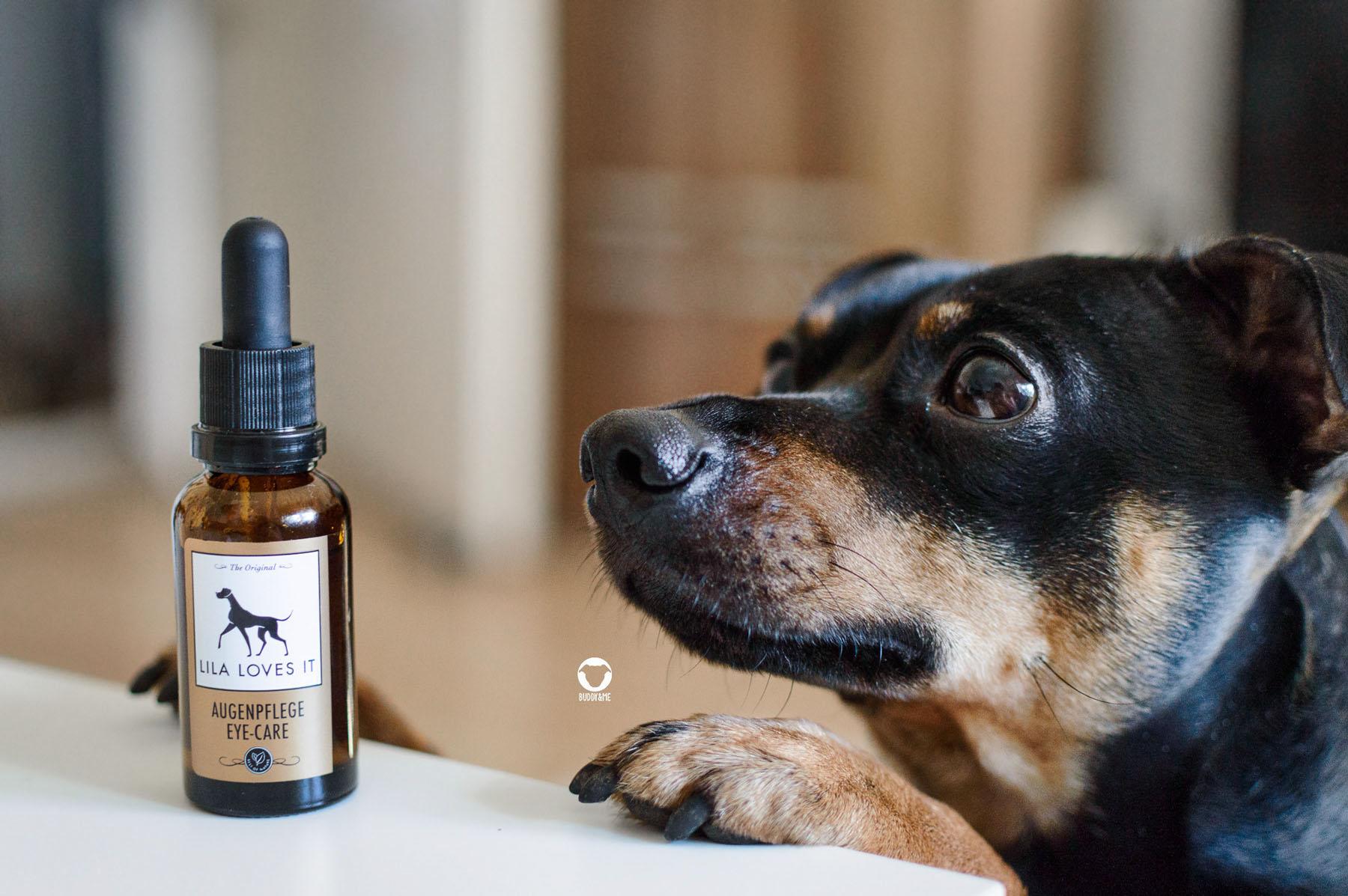 Pinscher Buddy, Buddy and Me, Hundeblog, Dogblog, Ruhrgebiet, Gesundheit, Augenpflege, Lila Loves It, Tipp, Empfehlung, Augen reinigen, Hund, natürlich, sanft, Verkrustungen, tränende Augen
