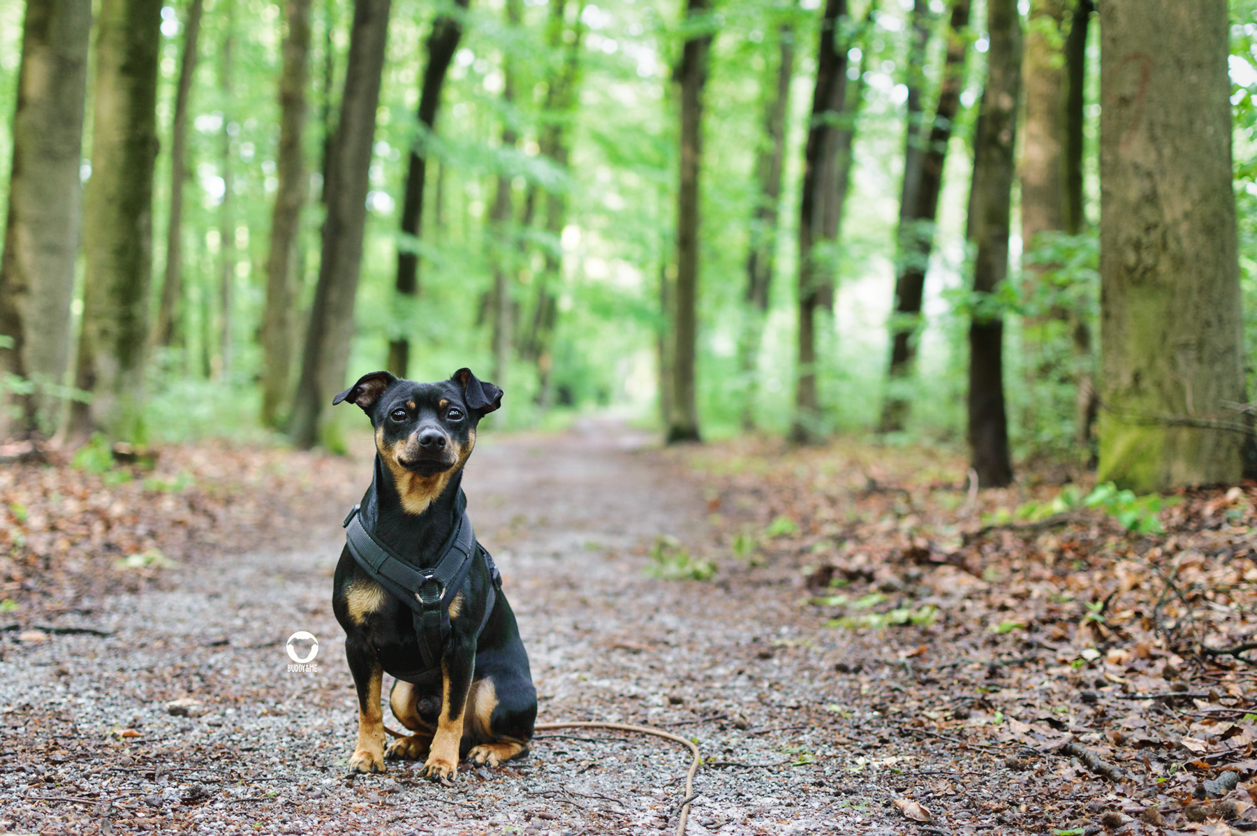 Pinscher Buddy, Buddy and Me, Hundeblog, Dogblog, Essen, Ruhrgebiet, Spazieren, Wandern, Gassi, Tipps, Wald, Frühling, Mülheim, Broich-Speldorf, Waldlernpfad