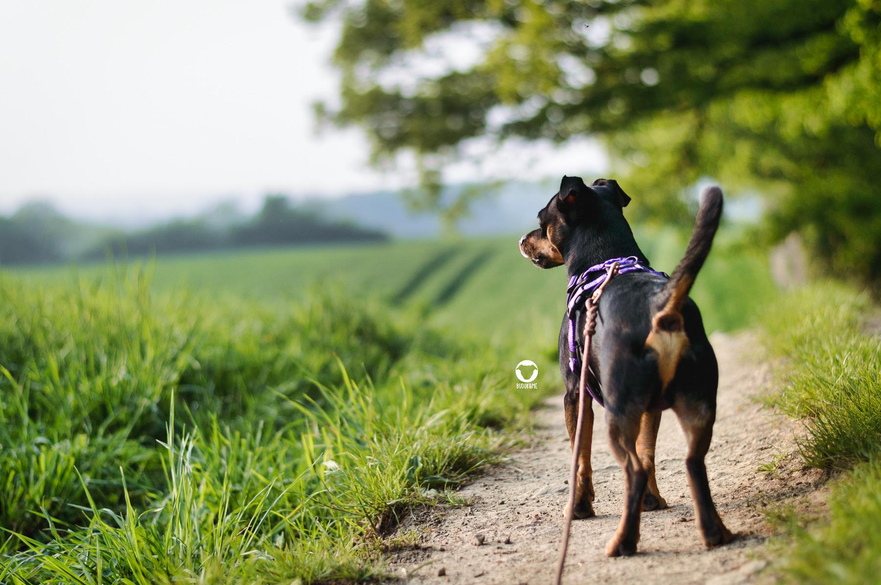 Pinscher Buddy, Buddy and Me, Hundeblog, Dogblog, Essen, Ruhrgebiet, Wandern mit Hund, Spaziergang, Gassi, Natur, Felder, Wald, Wiesen, Fischlaken, ehemaliges Kutel, Baldeneysee