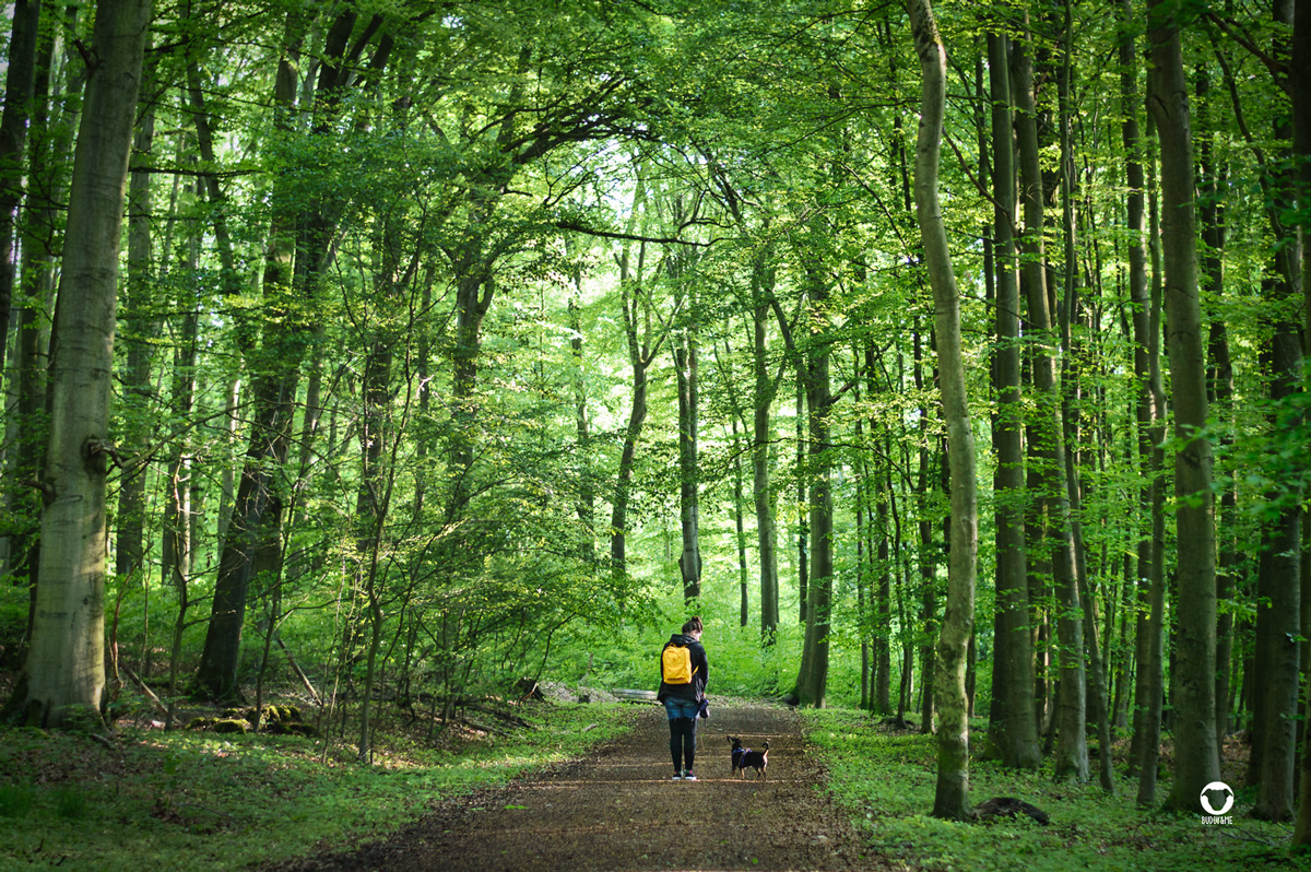 Pinscher Buddy, Buddy and Me, Hundeblog, Dogblog, Ruhrgebiet, Essen, Wandern, Spazieren, Gassi, Mülheim, Wambach, Oembergmoor, Wald
