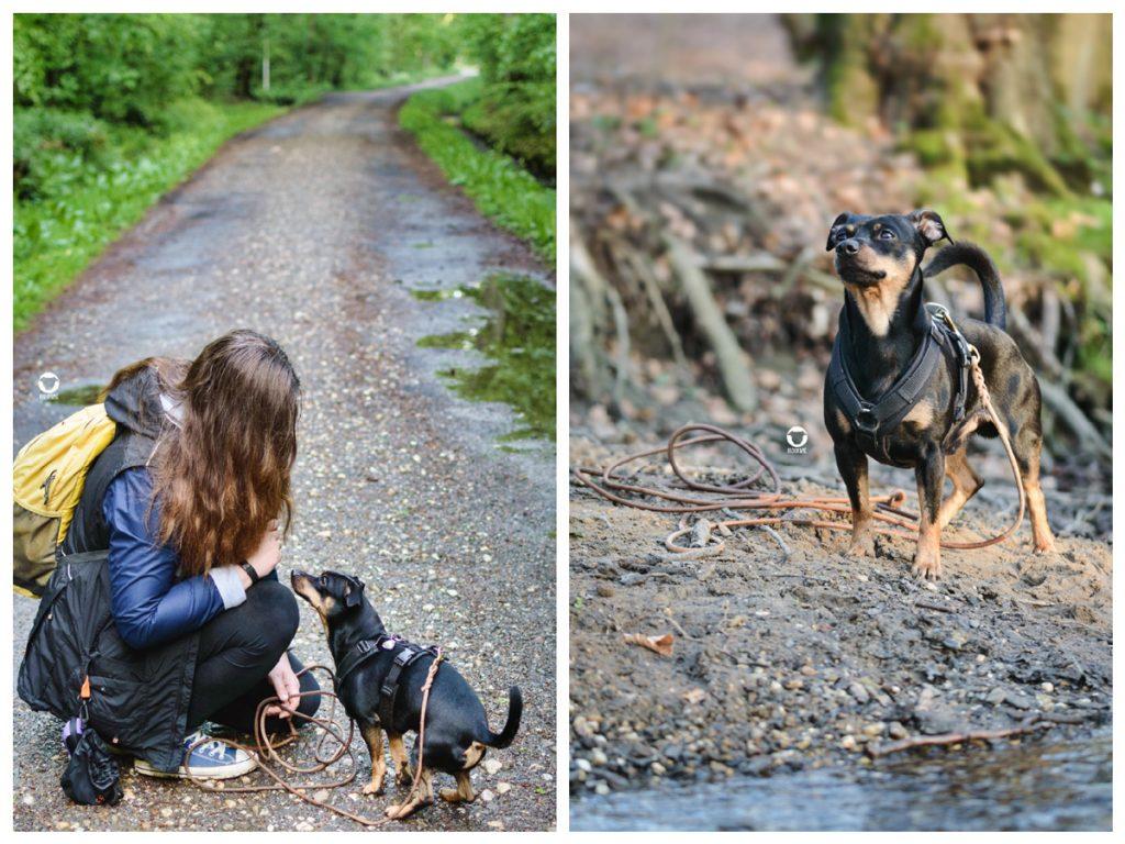 Pinscher Buddy, Buddy and Me, Hundeblog, Dogblog, Ruhrgebiet, Essen, Produkt, Tipp, Nachhaltigkeit, ökologisch, Leder Schleppleine, plastikfrei