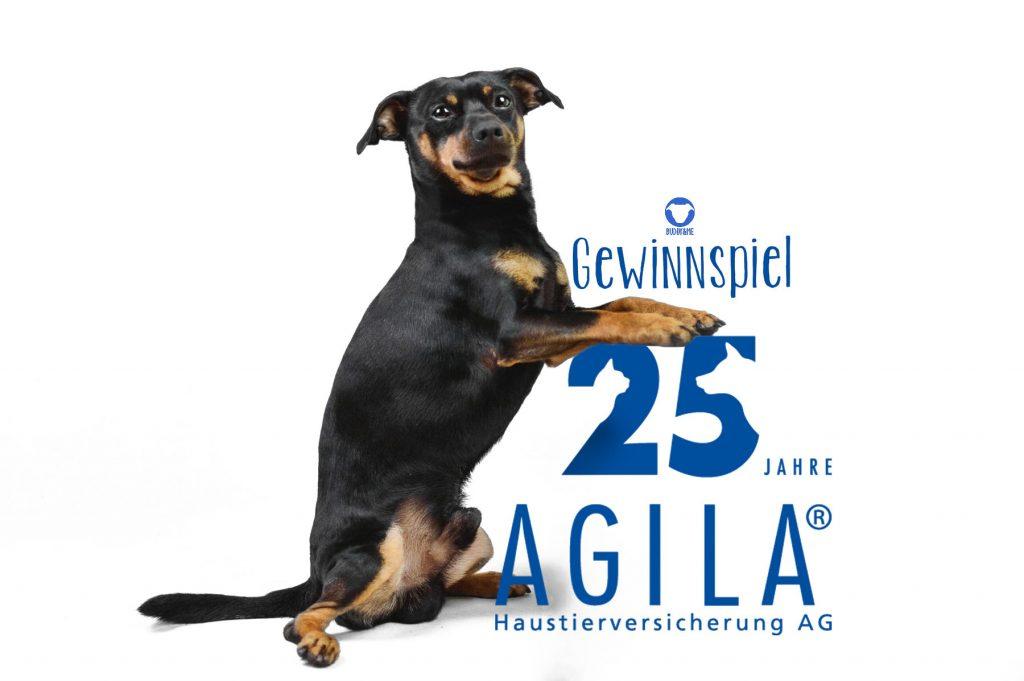 Pinscher Buddy, Buddy and Me, Hundeblog, Dogblog, AGILA, Jubiläum, 25 Jahre, Verlosung, Hundegeschichten, Hundealltag
