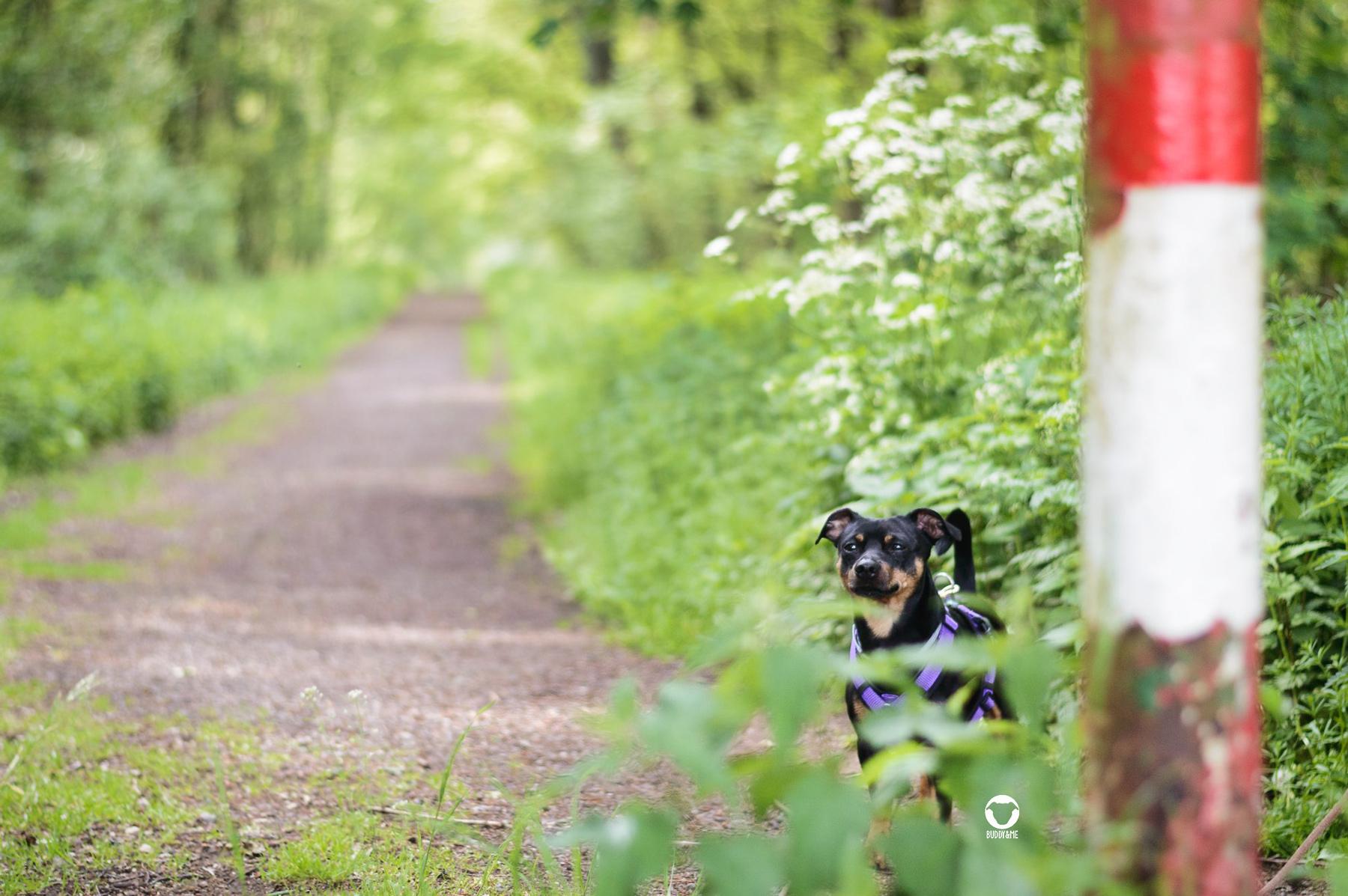 Pinscher Buddy, Buddy and Me, Hundeblog, Dogblog, Ruhrgebiet, Essen, Spazieren, Wandern, Gassi, Tipps, Rundweg, Kirchheller Heide, Kirchhellen, Bottrop, Heidhofsee