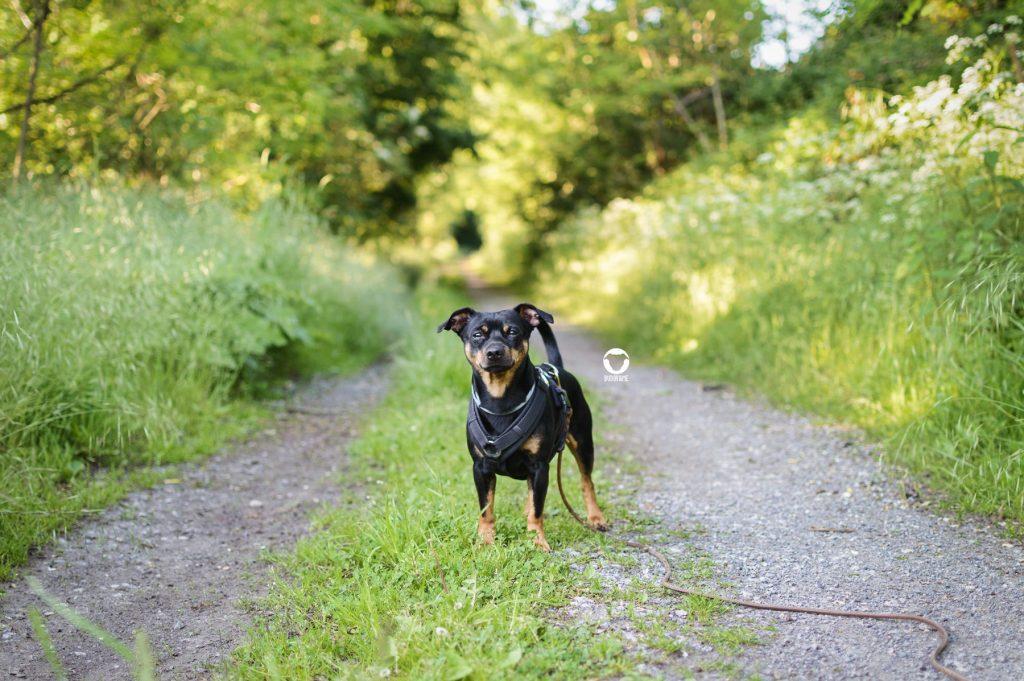 Pinscher Buddy, Buddy and Me, Hundeblog, Dogblog, Ruhrgebiet, Essen, Wandern, Spazieren, Gassi, mit Hund, Wald, Rundweg, Am Stiefel
