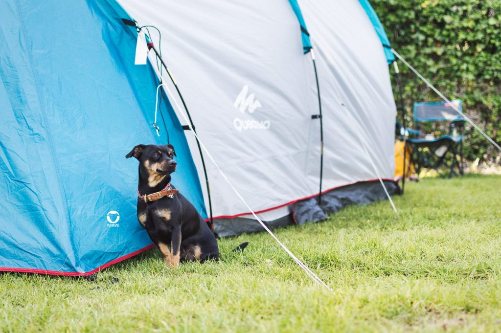 Pinscher Buddy, Buddy and Me, Hundeblog, Dogblog, Hundeurlaub, Camping mit Hund, Holland, Niederlande, Südholland, Rockanje, Hundestrand, Campingplatz, Zelten, Sommer, Meer