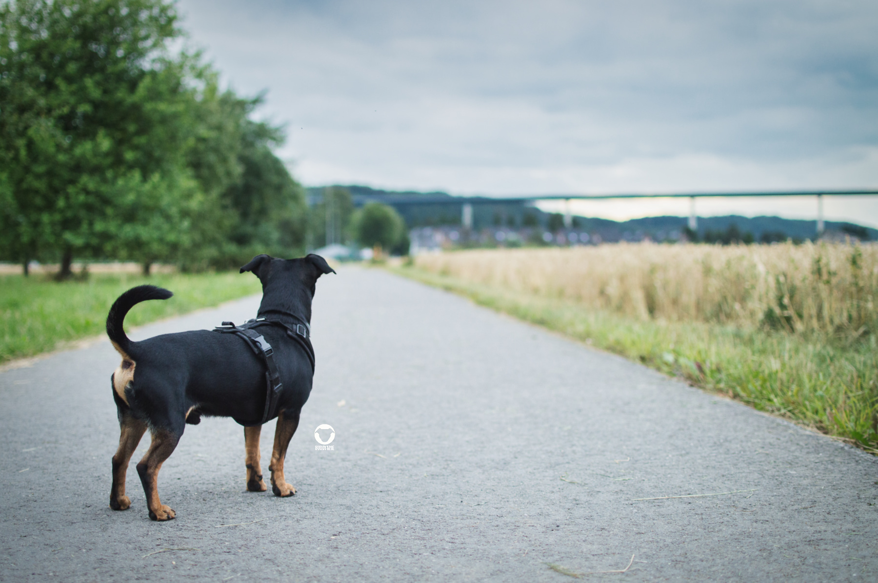 Pinscher Buddy, Buddy and Me, Hundeblog, Dogblog, Ruhrgebiet, Essen, kleine Hunde, Natur, Felder, Sommer, Juli, Spazieren, Gassi, Hundealltag