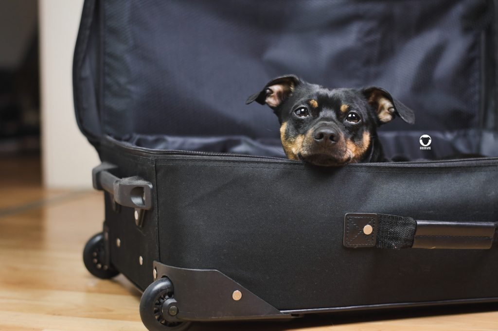 Pinscher Buddy, Buddy and Me, Hundeblog, Dogblog, Reisen mit Hund, Hundeurlaub, Meer, Ostsee, September, Koffer packen