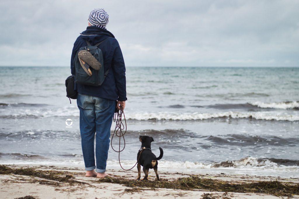 Pinscher Buddy, Buddy and Me, Hundeblog, Dogblog, Urllaub mit Hund, Hundeurlaub, Ostsee, Darß, Zingst, Strand, Meer, Herbst, September