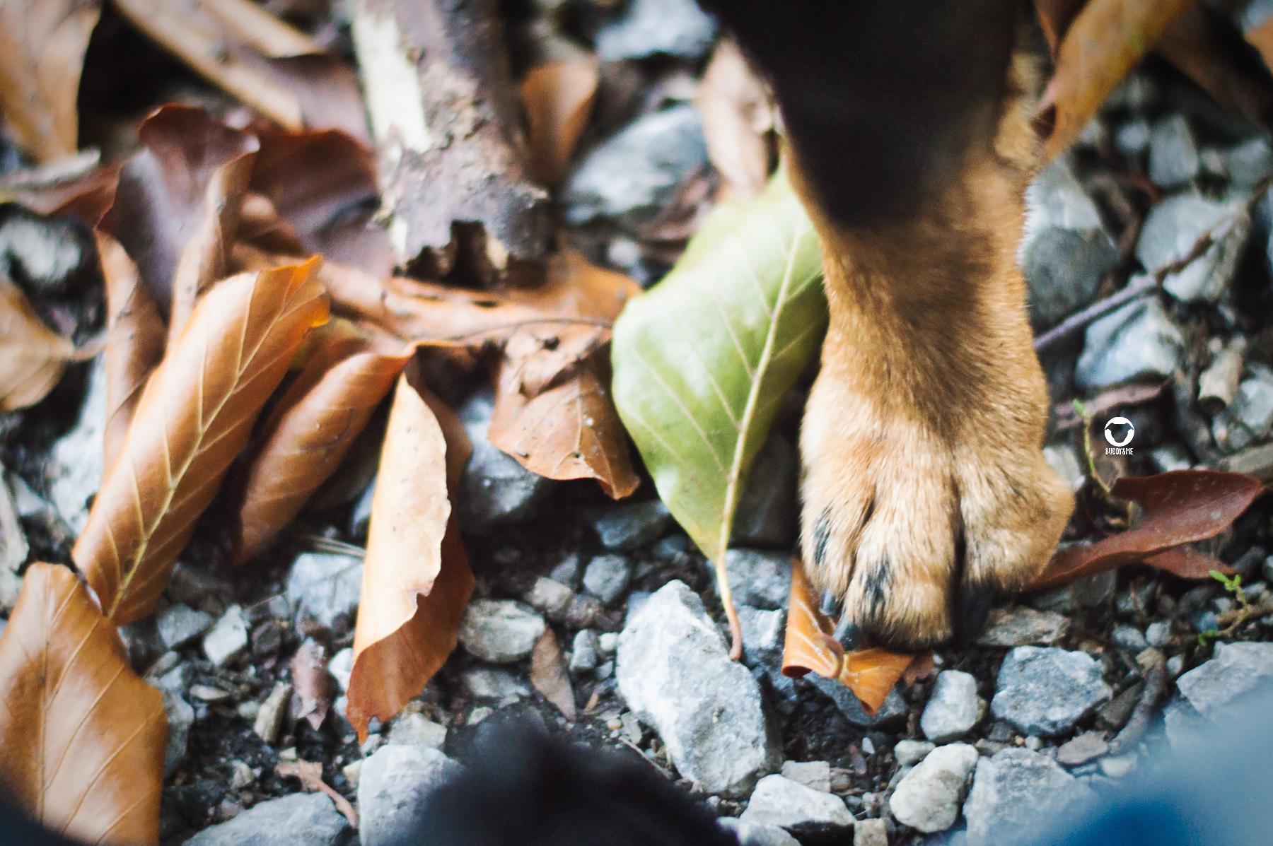 Pinscher Buddy, Buddy and Me, Dogblog, Hundeblog, Ruhrgebiet, Herbst, Wald, Laub, Herbstspaziergang